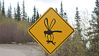 Click image for larger version.  Name:canadianbugcrossing.jpg Views:5 Size:21.6 KB ID:83143